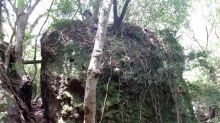 文殊仙寺敷地内にある植物が絡む岩