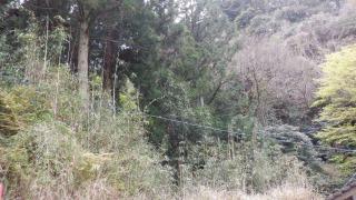 【熊野磨崖仏】周辺の光景