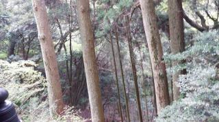 木々が見える【両子寺】奥の院