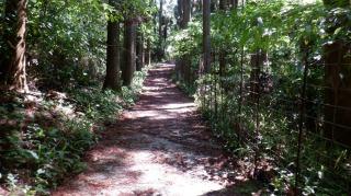 森の中にある一ノ宮八幡社遊歩道