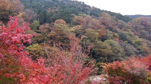 湯原温泉の紅葉