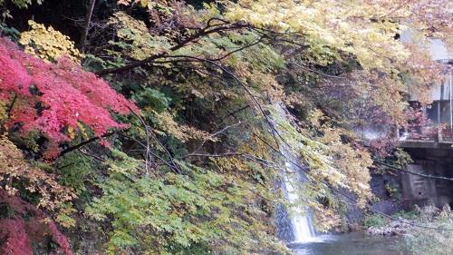 湯原温泉内の川と紅葉の景色