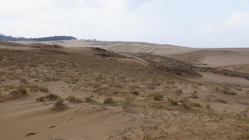 鳥取砂丘が点々とした植物と広がる光景