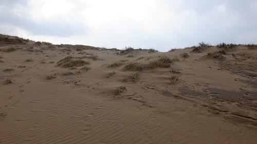 鳥取砂丘内の植物と水