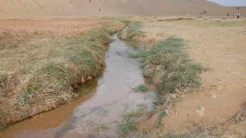 鳥取砂丘のオアシスから流れる川