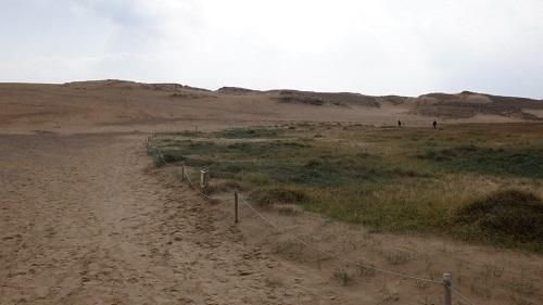 鳥取砂丘で生物が生息する場所