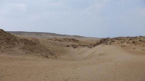 でこぼこしている鳥取砂丘内の光景