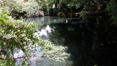 公園内にある明神池の光景