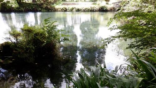 明神池と緑が映える植物