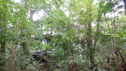 木々に中に見える筌ノ口温泉新清館の建物