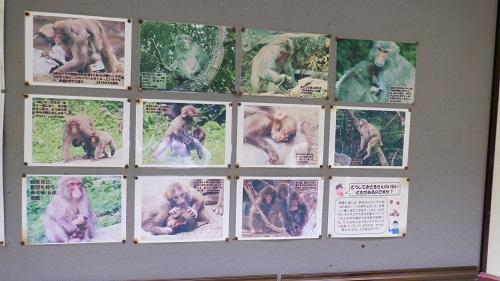 神庭の滝敷地内に住む猿
