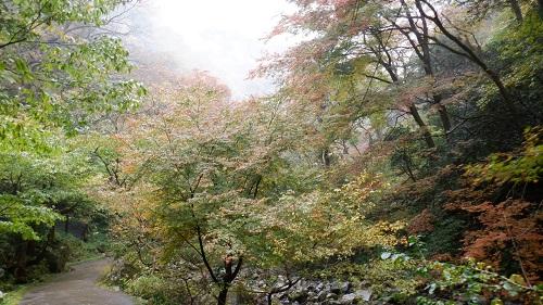神庭の滝遊歩道の光景