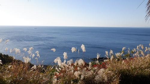 クルスの海とススキ