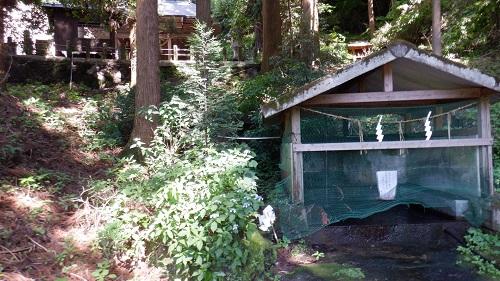 上洗川神社の湧水場所