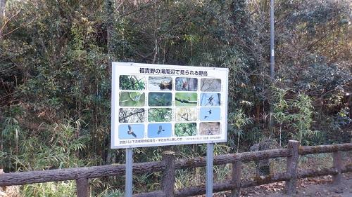 福貴野の滝周辺にいる野鳥の説明看板