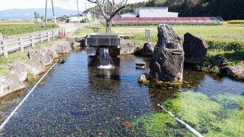 前川水源からの水が注がれている池