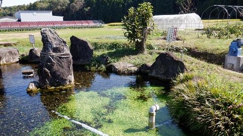 前川水源の池と畑の光景
