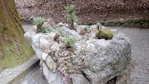 天岩戸神社にある小さな庭園のような岩