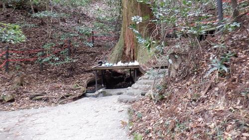天岩戸神社東本宮にある根元から水が湧くご神木