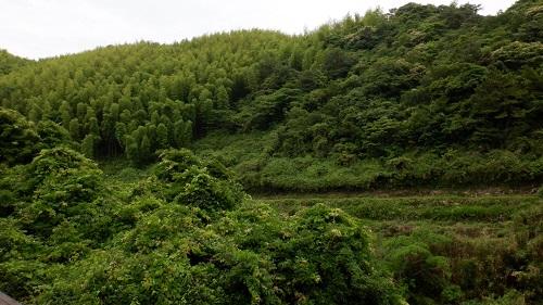 水の口湧水周辺の緑に囲まれた光景