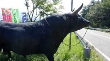 大分県の九重町で一休み! 動物とふれあえる【べべんこ】