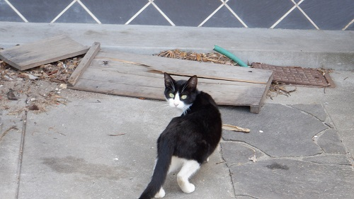 川棚温泉の野良猫