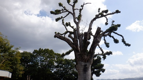 原鶴温泉散策途中にあった木