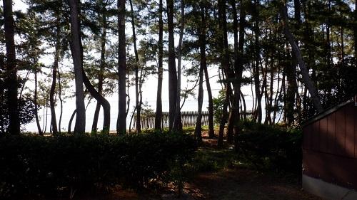 口之津温泉白浜ビーチホテル海岸沿いの松林