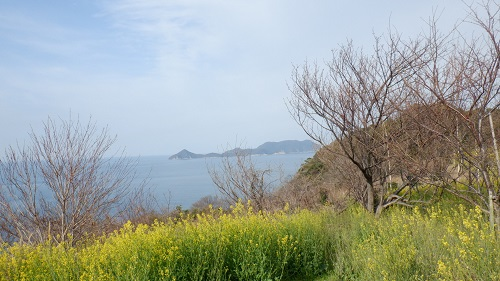 菜の花と海の光景