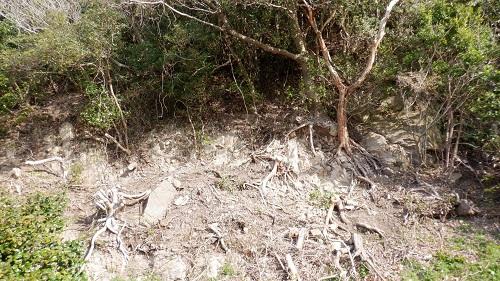 遊歩道から見える根のある木々