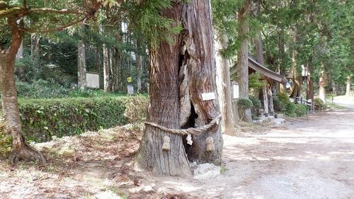 木の割れ目に弁天様